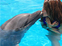 Dolphin Encounter & Wild Fun Jet from Montego Bay